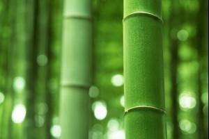 Полезные свойства бамбука