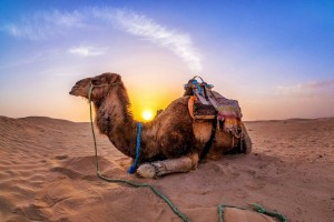 Секреты выбора верблюжьих одеял!